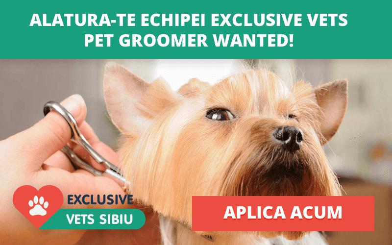 pet-groomer-exclusive-vets