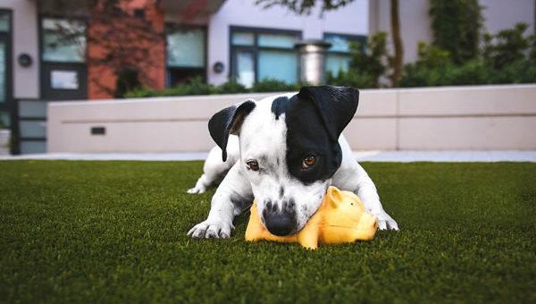 Haideți să înțelegem mai bine comportamentul câinilor noștri!